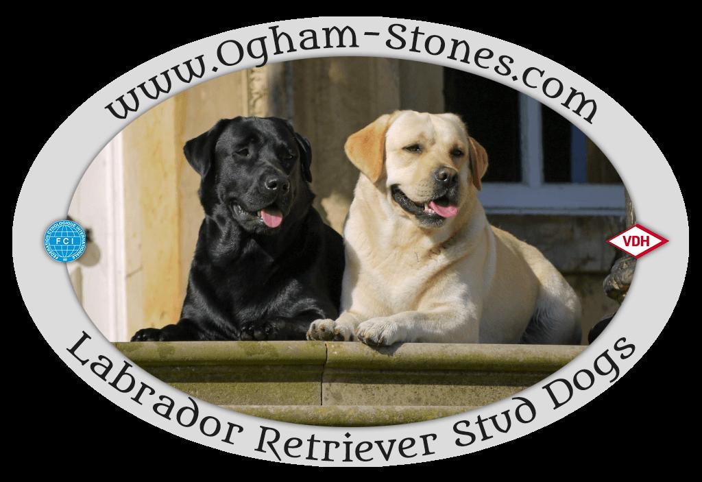 Ogham Stones Labrador Retriever Stud Dogs